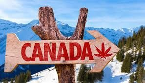 The tourism of Canada can take advantage of cannabis