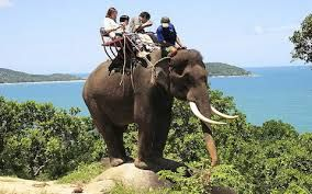 Elephant tourism needs to be banned in all countries
