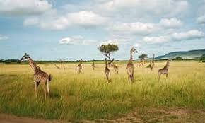 Kenya Tourism - Hoping for a better tomorrow!