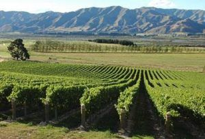 Waitaki an emerging wine region in New Zealand