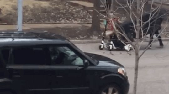 I Have Seen the Future of Mobility and It Is These Dudes Moving a Couch With Two E-Scooters