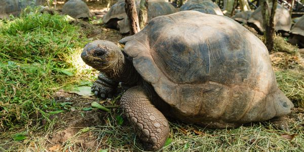 From Lively Markets to Giant Tortoises - Choose Your Own Zanzibar Adventure