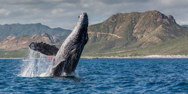 Whale Concerts and Art-to-Table dining? Unique Experiences to Try in Los Cabos