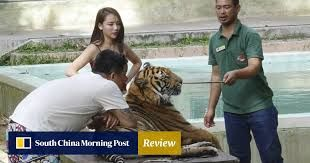 Now Chinese are more inclined to animal-friendly tours