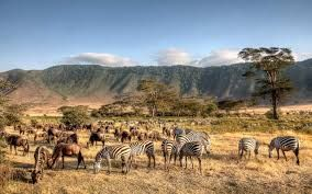 Tanzania eyes tourism boost, works on restoring ancient city