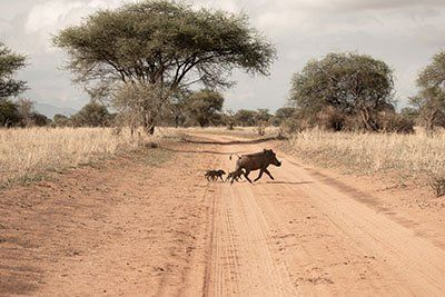 Aloito Africa Welcomes Guests with Short, Sweet Safari Itinerary During Birthing Season