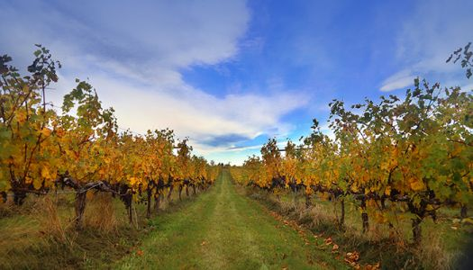 Wineries that Offer Stunning Views of Virginia's Scenic Beauty