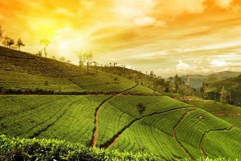 Explore 'Scotland of the East' - Meghalaya with exciting JetEscapes' holidays from Jet Airways
