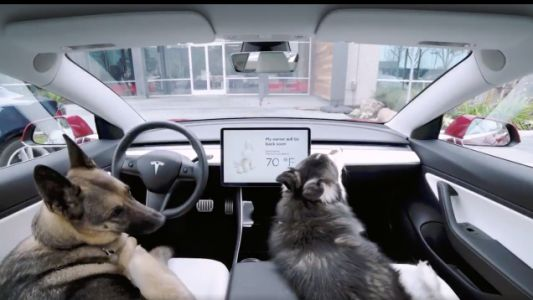 Tesla's New 'Dog Mode' Will Keep Your Pup Cool While You're out of the Car