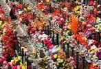 China's Qingming festival boosts domestic tourism recovery