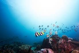 Indonesia Tourism Ministry takes part in the Marine Diving Fair in Japan