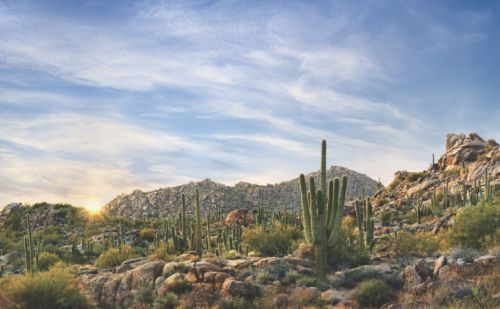 Where to Dine, Stay and Explore in Scottsdale
