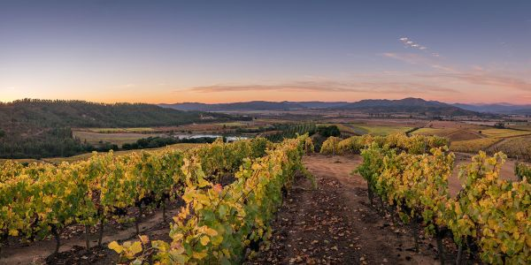 Meet MOVI: Chile's Independent Winemaker Movement