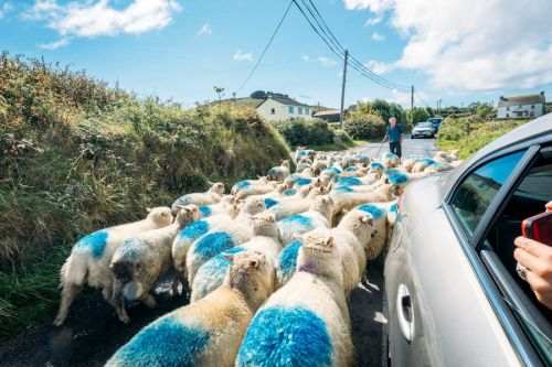 Things You Should Know Before Renting A Car & Driving In Ireland