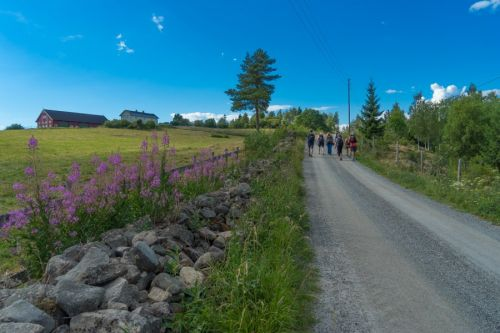 Everything You Need to Know About Walking Saint Olavs Way in Norway