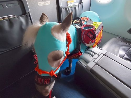 An American Airlines passenger flew her miniature service horse named Fred first class from Michigan to California