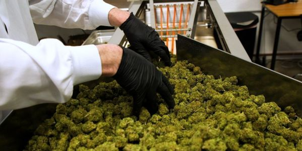 Pot stocks surge for a second day after a marijuana legalization act passes a key vote