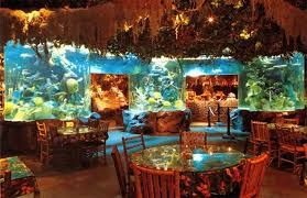 Rainforest Cafe, unique and exciting themed restaurant in London