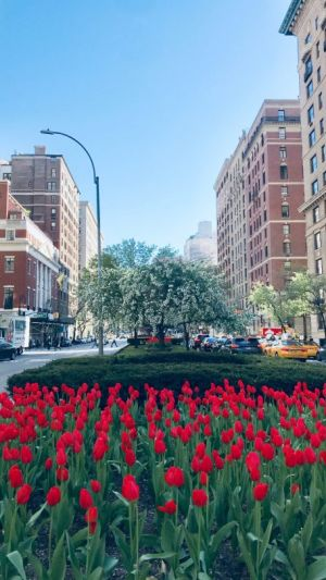 Spring Splendor in New York City