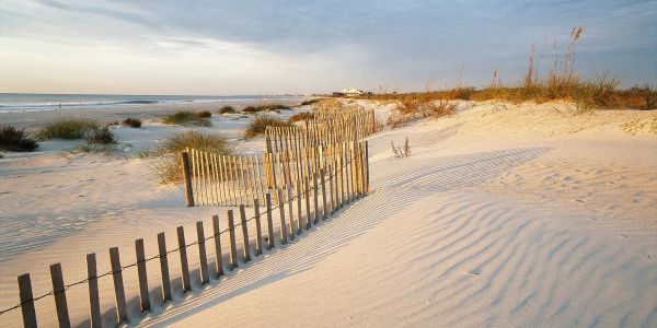 From Alligators to Safaris, Discover the Natural Side of Myrtle Beach