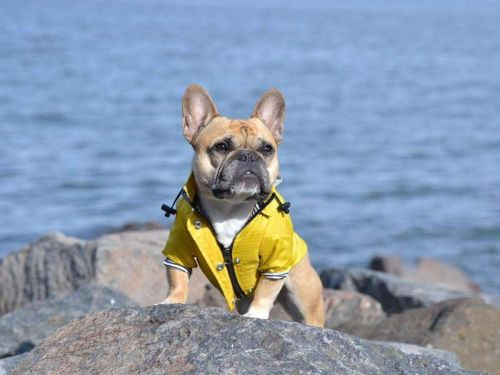 The best raincoats for dogs