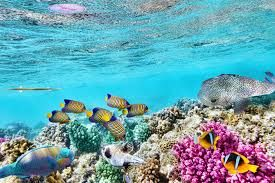 Queensland to provide united Great Barrier Reef tourism message via visitors