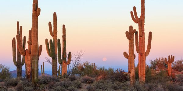 8 Reasons Summertime's the Right Time in Phoenix