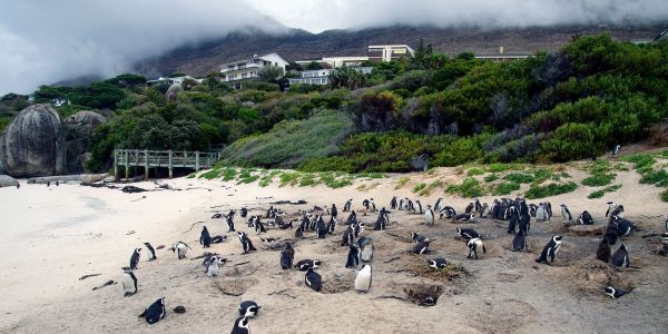 Sojourn Through South Africa on These Cape Town Day Trips