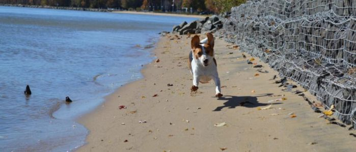 The Guide to Virginia's Pet-Friendly Beaches