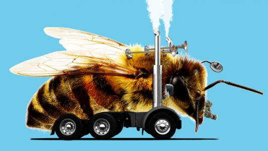 That Big Rig You're Passing Might Be Full of Bees