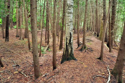 I TOOK A RARE TUMBLE ON BAYFIELD'S WOODLAND TRAIL THIS MORNING