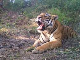In Bihar, tiger reserves, national parks, and sanctuaries will remain closed