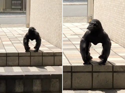 A bizarre video of a crow that looks like a tiny gorilla has gone viral, and people are baffled
