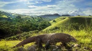 Indonesia trying to promote Komodo Island as the next Bali