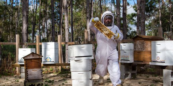 How Sweet it is: Meet the Resort Beekeeper Bringing Farm-Fresh Honey to Orlando and Beyond
